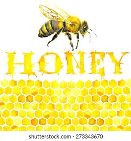 Honey, honeycomb, sweet bee. Watercolor illustration