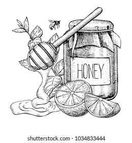 Honey with lemon and mint drawing. Jar, wooden spoon, honey drop, bee, hearb leaf and fruit slice sketch. Engraved illustration with tea ingredient, alternative medicine. Label, icon, packaging design
