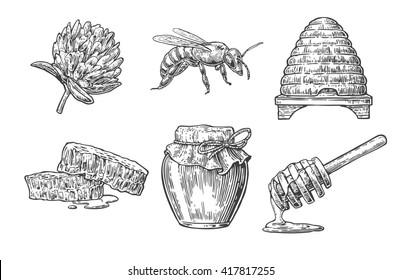 Honey set. Jars beer and honeycomb. Hand drawn design element. Engraved vintage illustration.