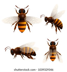 Honeybee isolated set on white background. Striped flying bee in front and side view illustration in cartoon style. Insect symbol for natural, healthy and organic food production design