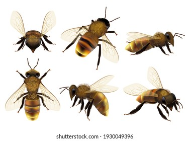 Honeybee realistic. Different wildlife danger insects flying wasp natural botanical fauna closeup pictures of bee