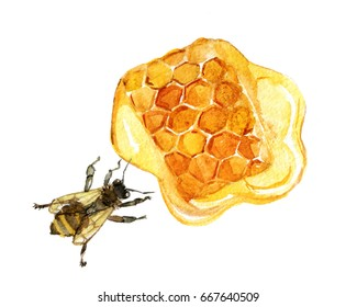 Honeycomb with bee isolated on white background, watercolor illustration