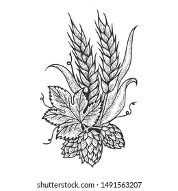 Hops and barley plant engraving sketch raster illustration. Scratch board style imitation. Black and white hand drawn image.