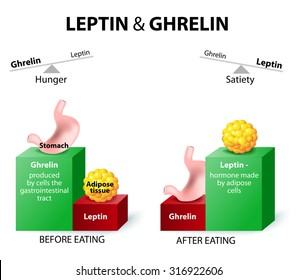 Hormones regulating appetite. Leptin the satiety hormone. Ghrelin the hunger hormone. When ghrelin levels are high, we feel hungry. After we eat, ghrelin levels fall and we feel satisfied.