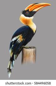 Hornbill bird on gray background drawing