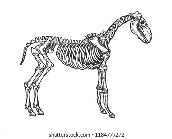 Horse animal skeleton engraving raster illustration. Scratch board style imitation. Black and white hand drawn image.
