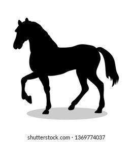 Horse farm mammal black silhouette animal. JPG illustration.