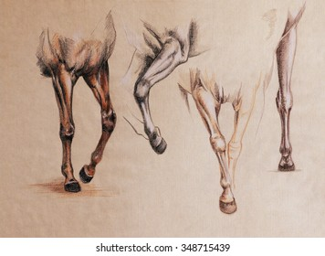 horse front legs in motion - vintage style anatomy sketch on a toned paper