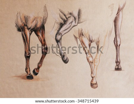 Horse Front Legs Motion Vintage Style Stock Illustration 348715439