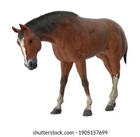 Horse Grazing 3D illustration on white background