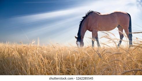 Horse grazing in field. Sun shine. 3D rendering