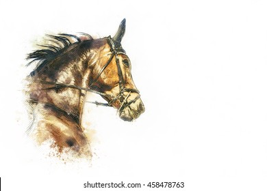 horse head painting on white background