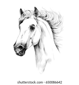 horse head profile sketch graphics
