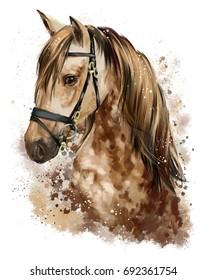 Horse head watercolor drawing