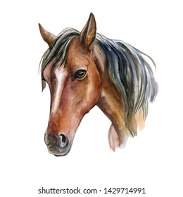 Horse portrait. Watercolor. Realistic animal isolated on white background. Template. Close-up. Clip art. Hand drawn.