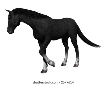 A horse, rendered with ray-tracer Bryce 6