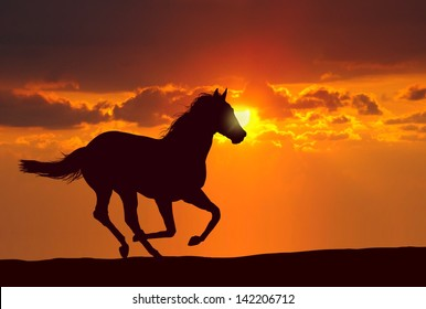 Horse running under sunset