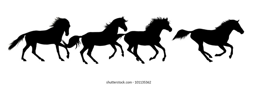 Horse silhouettes over white background