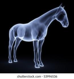 horse x-ray
