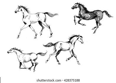 Horses collection sketch vintage illustration