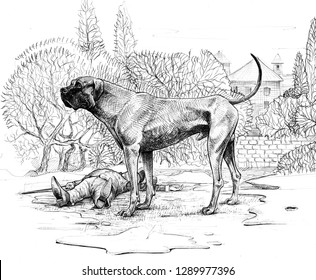 The Hound of the Baskervilles. Big dog drawing.