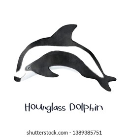 Hourglass Dolphin animal realistic illustration