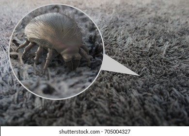 House dust mite - 3D Rendering
