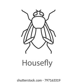 Housefly linear icon. Insect. Musca domestica. Thin line illustration. Fly insect. Contour symbol. Raster isolated outline drawing