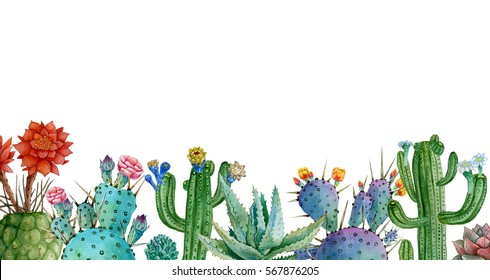 houseplants postcard, summer watercolor cactus and succulents illustrate, flower shop design