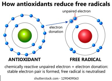 How antioxidants neutralise free radicals in the body