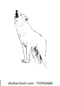 Howling wolf sketch
