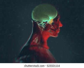 Human anatomy, brain. 3d illustration