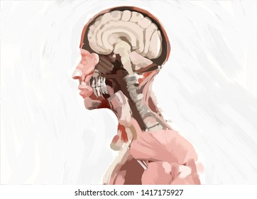 Human anatomy brain illustration,painting style, concept.
