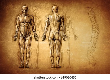 human anatomy drawing, old, canvas; 3d illustration
