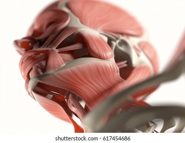 Jaw Muscle Images, Stock Photos & Vectors | Shutterstock