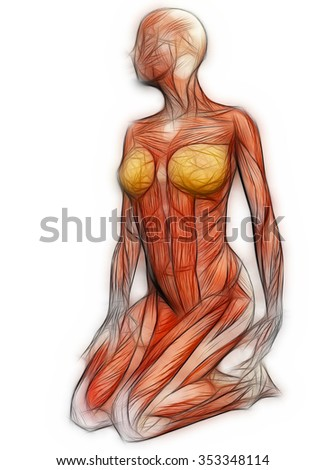 Royalty Free Stock Illustration Of Human Anatomy Female Muscles Made