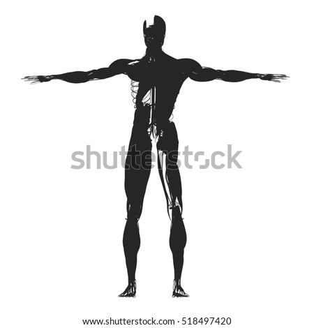 Human Anatomy Health Silhouette Outline 3 D Stock Illustration
