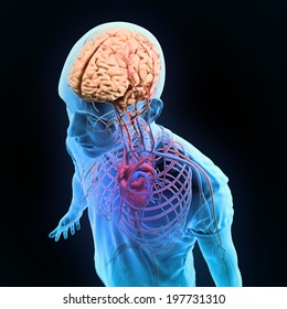 Human anatomy illustration - central nervous system with a visible brain