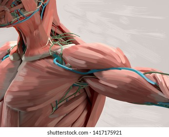 Human anatomy illustration. Painting style, concept, body.