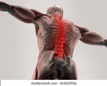Human anatomy, spine, back pain. 3D illustration.