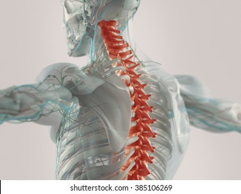 Human anatomy spine pain highlighted in red. X-ray view.