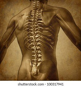 Human back medical document an old vintage grunge parchment texture for backache and back pain with an upper torso body skeleton with spine and vertebral column as a medical health care concept.