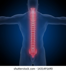 human backbone, 3D Rendering,It is composed of around 270 bones at birth – this total decreases to around 206 bones by adulthood after some bones get fused together.