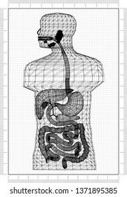 Human Body Architect Blueprint - 3D Renderings
