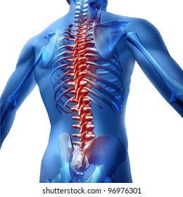 Human body backache and back pain with an upper torso body skeleton as a spine and vertebral column in red as a medical health care concept for spinal surgery and therapy on white background.
