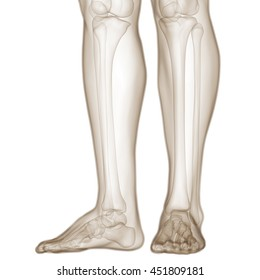 Human Body Bone Joint Pains (Foot and Leg joints). 3D