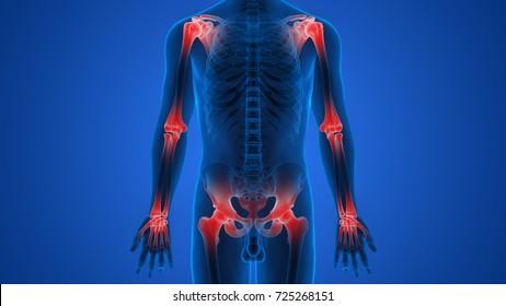 Human Body Bone Joint Pains Anatomy. 3D