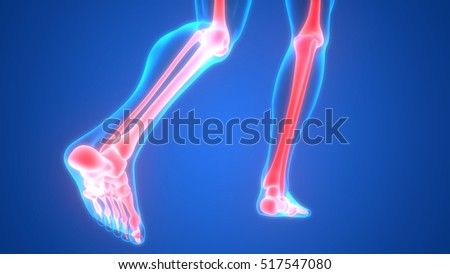 Human Body Bone Joint Pains Foot Stock Illustration 517547080 ...