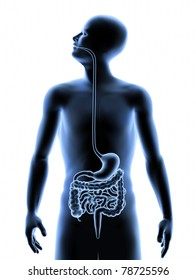 The Human Body - Digestive System. X-Ray Effect. 3D illustration