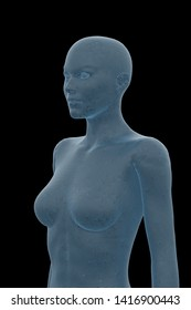 Human Body, Female, Woman, 3D Illustration